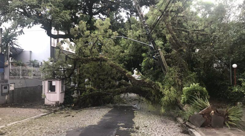 Doca árvore caiu