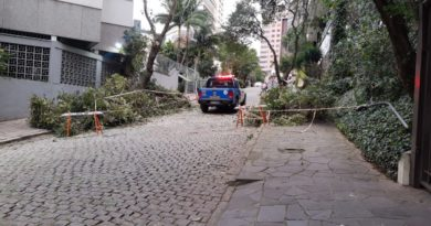 Árvore Porto Alegre