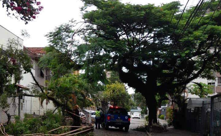 Árvore Porto Alegre Queda