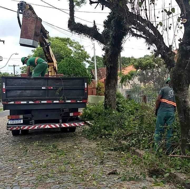 Árvores Porto Alegre