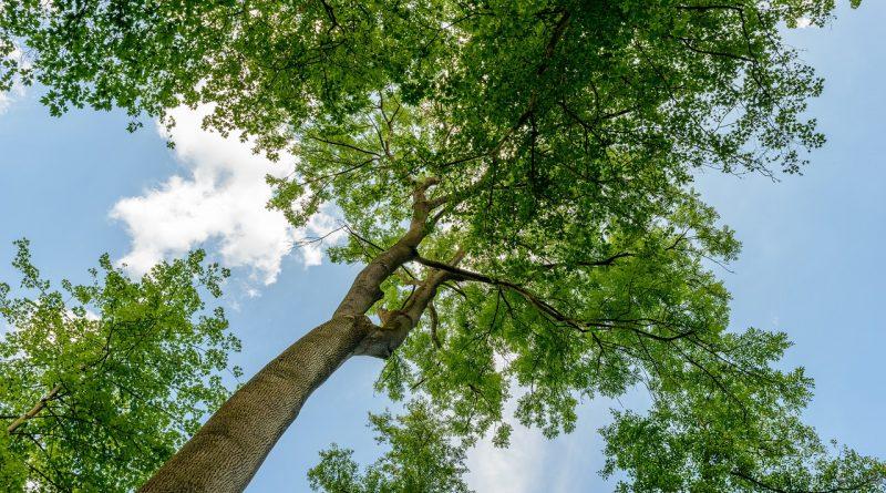 Árvores grandes